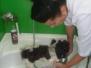W salonie groomerskim